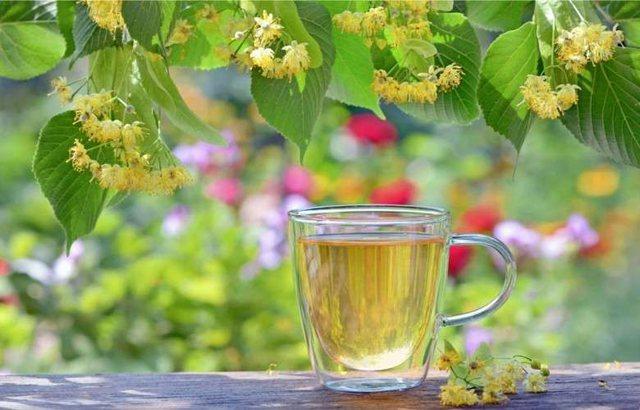 Vuani nga reumatizma, mbillni këtë bimë në shtëpi e