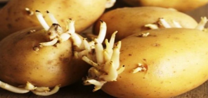 Beware as this is fatal to life / Do not make this mistake with potatoes, 4