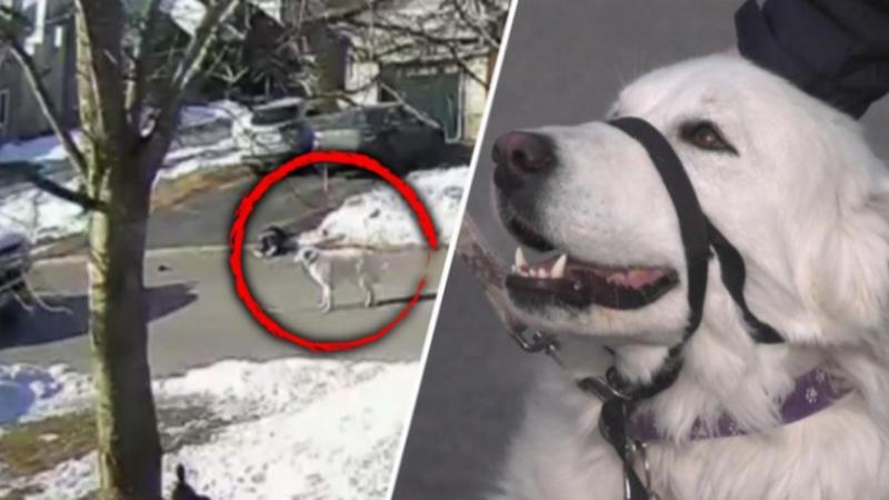 Qeni shpëton pronaren që ra pa ndjenja, reagimi i tij i lë pa
