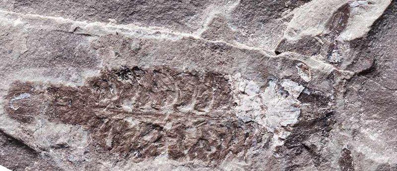 A e dini se cila ka qenë kafsha e parë që ka ecur mbi Tokë?
