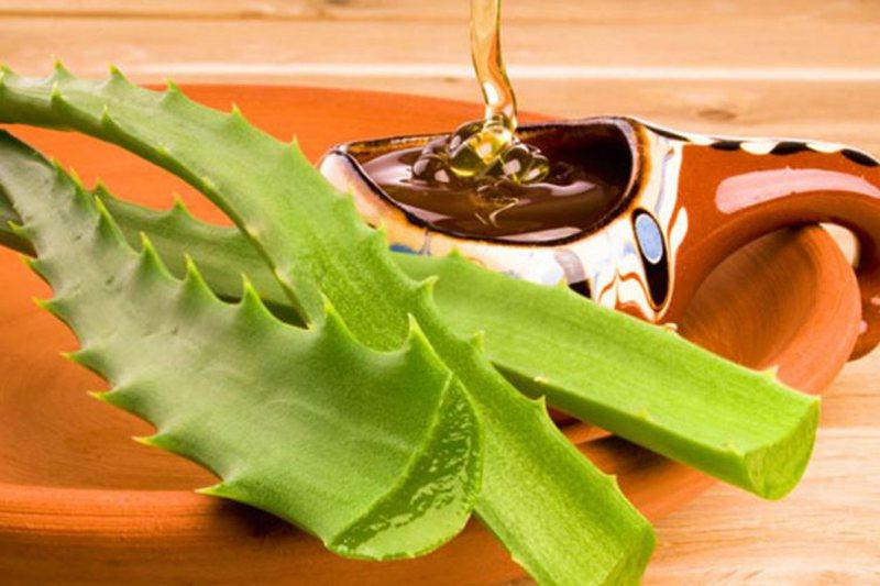 Mjaltë dhe Aloe Vera, përzierja magjike që po i befason të