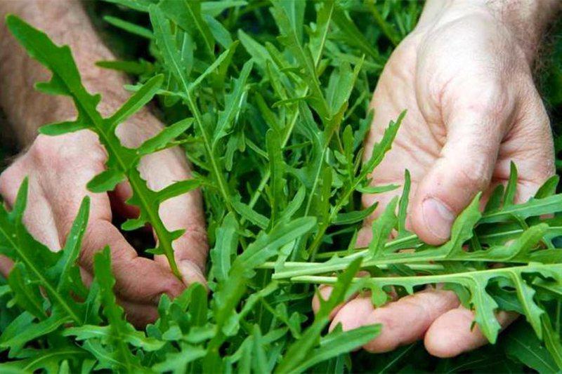 Është e pasur me vitamina dhe minerale, kjo bimë ndihmon në