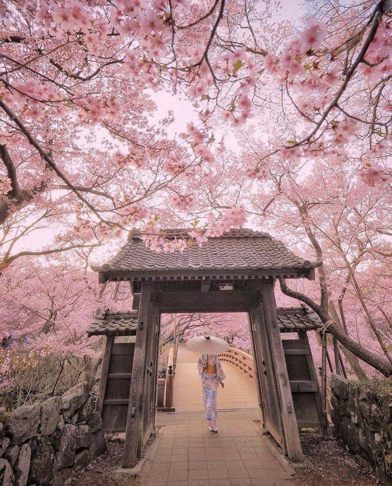 Ndodh për herë të parë në 1,200 vjet, lulet në