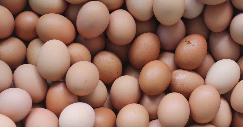 4 false myths about the egg