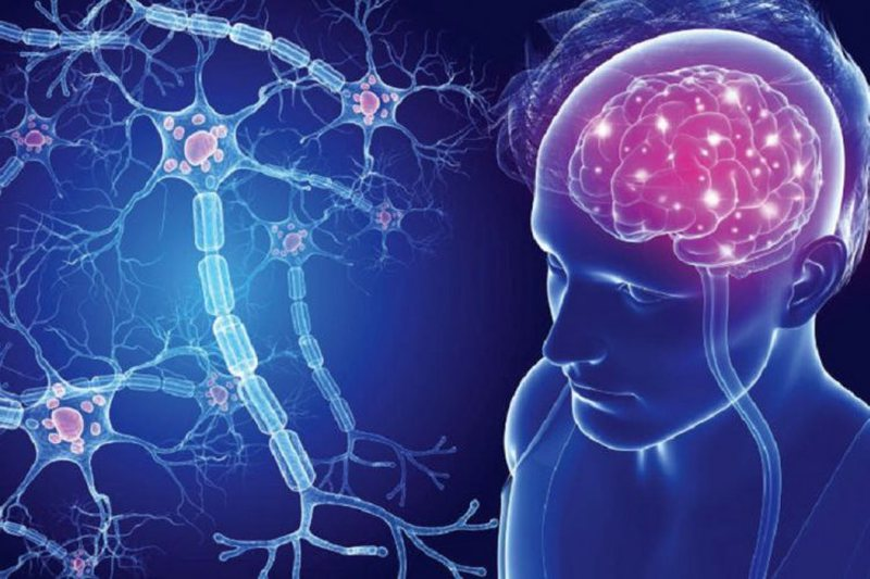 Multiple sclerosis, how vitamin D affects brain protection, Oxford University