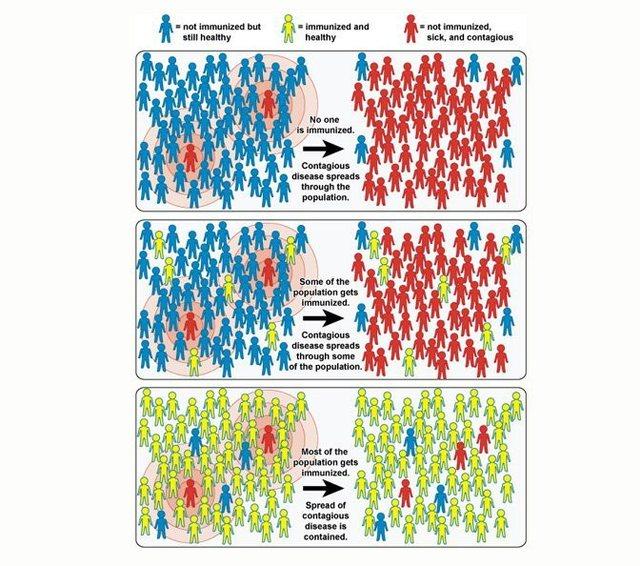 A na mbron vërtet Herd immunity nga Covid-19? Strategjia që po