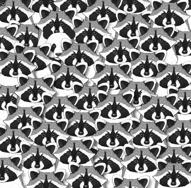 Test/ Sa sy të mprehtë ke? Gjej çfarë fshihet në 15