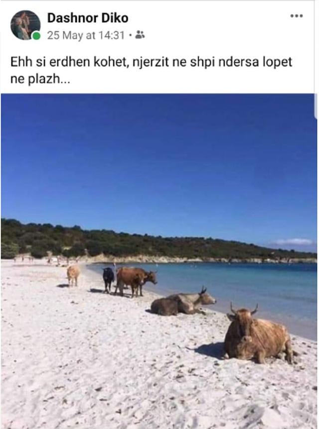 Dashnor Diko bën ironi për plazhet: Ehh si erdhën kohët...