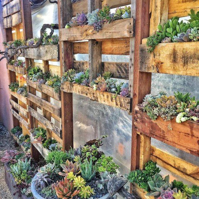Foto/ Brenda shtëpisë me 200 lloje bimësh