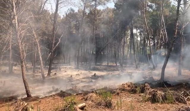 Drejtori i Emergjencave Civile reagon për zjarret: Bashkitë duhet