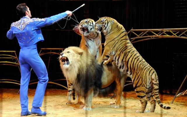 Franca i thotë Stop cirkut të kafshëve