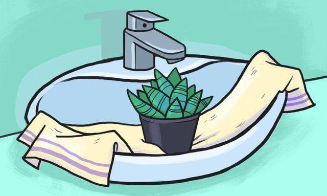 5 mënyra për të ujitur lulet edhe kur je larg shtëpisë