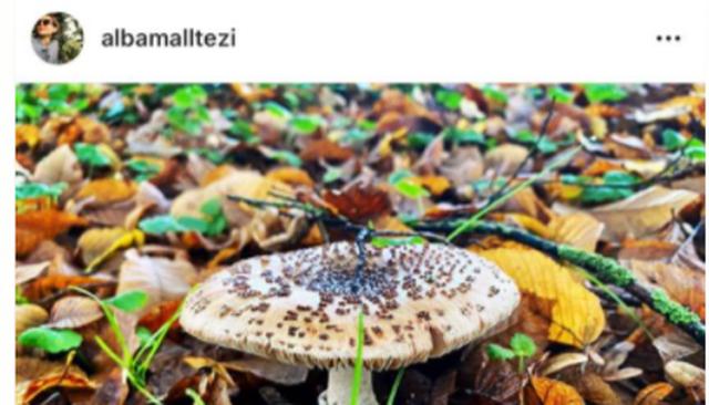 Alba Malltezi i përgjigjet me disa foto nga natyra presidentit