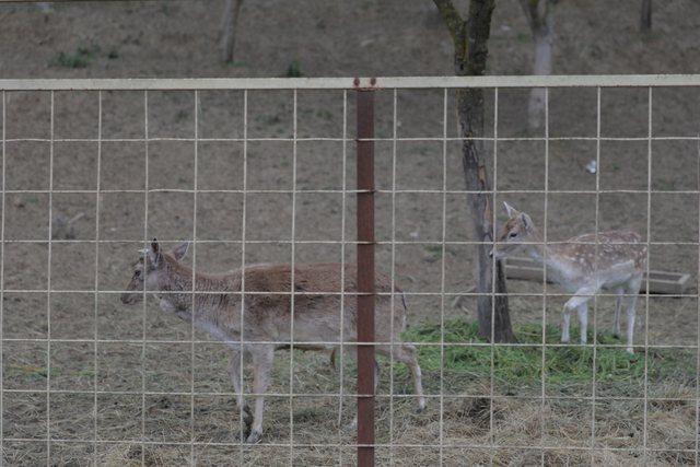 Kopshti Zoologjik po transformohet. Gati për fëmijët më 1
