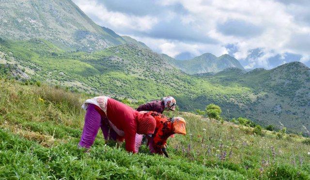BBC: Bimët në malet shqiptare që na mbajnë të rinj.