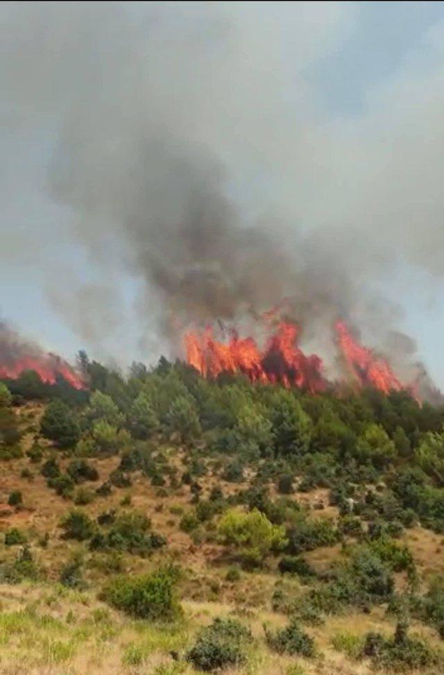 Vihet nën kontroll zjarri i rrezikshëm në Mamurras,