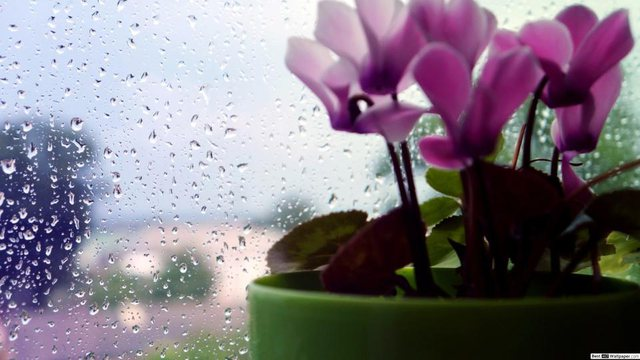 I ftohti rikthen shiun dhe borën në pranverë